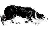 Mette med hundar
